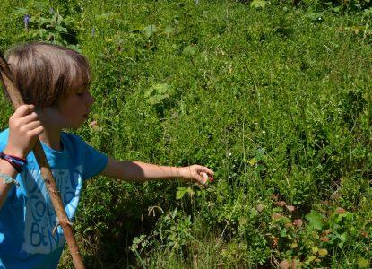 Cueillette de framboises à Montsapey