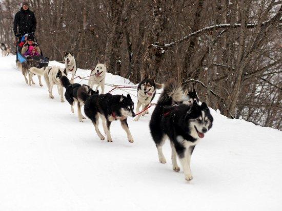 Run-Arctic