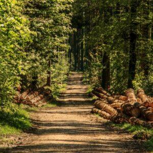 Forêt en Porte de Maurienne